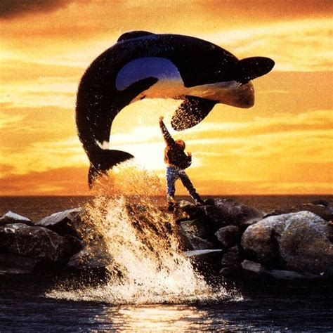 How Does Rust and Bone Compare to Free Willy and Orca?